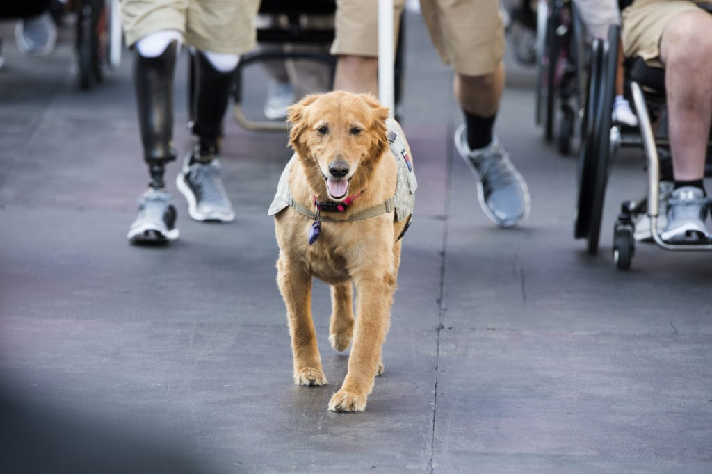 Does Insurance Cover Service Dogs? | The CheckUp by HealthCare.com