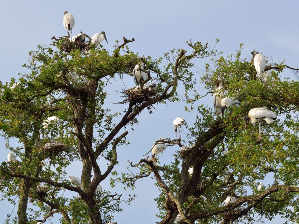 birds in tree | texas obamacare open enrollment