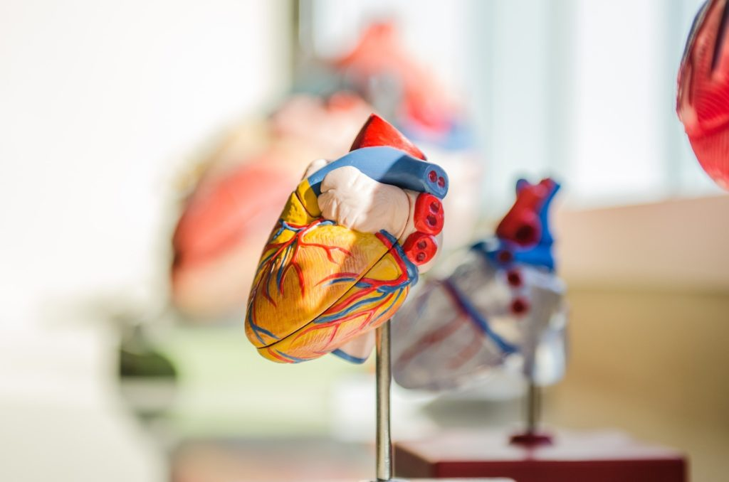 heart models | cardiologist | 10 checkups to get